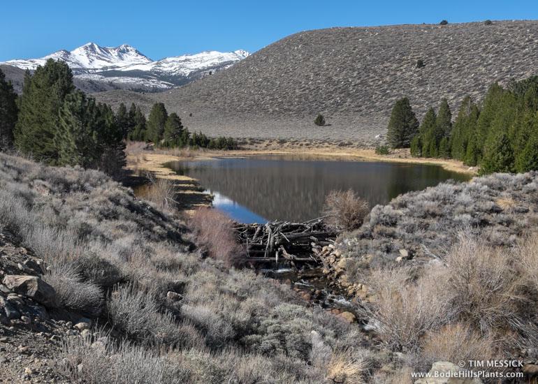 Dynamo Pond