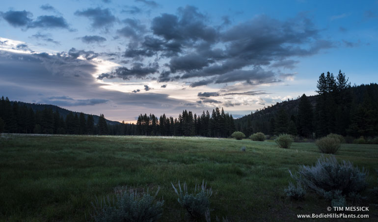 Meadow at Grover Hot Springs