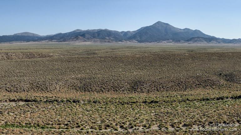 The Wassuk Range from Fletcher Valley