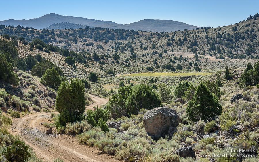 Cinnabar Canyon