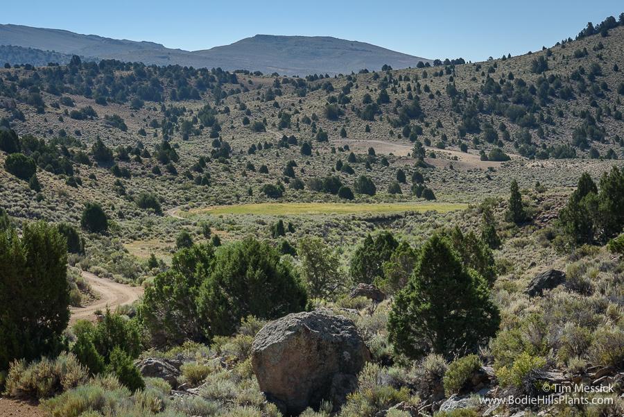 Cinnabar Canyon Bog