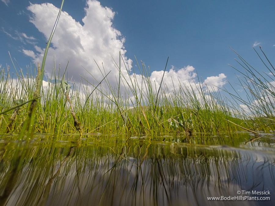 Chemung Lake