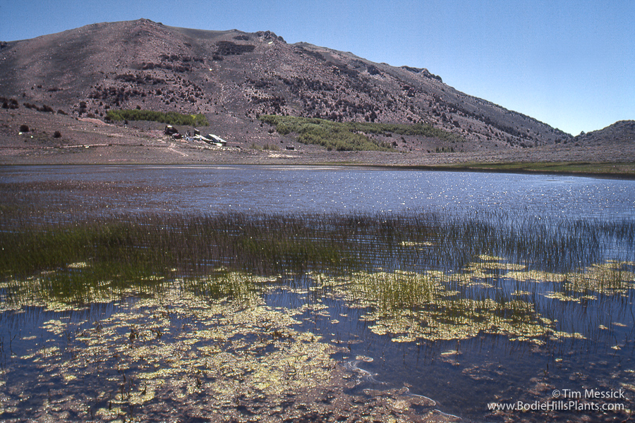 Chemung Lake in 1980