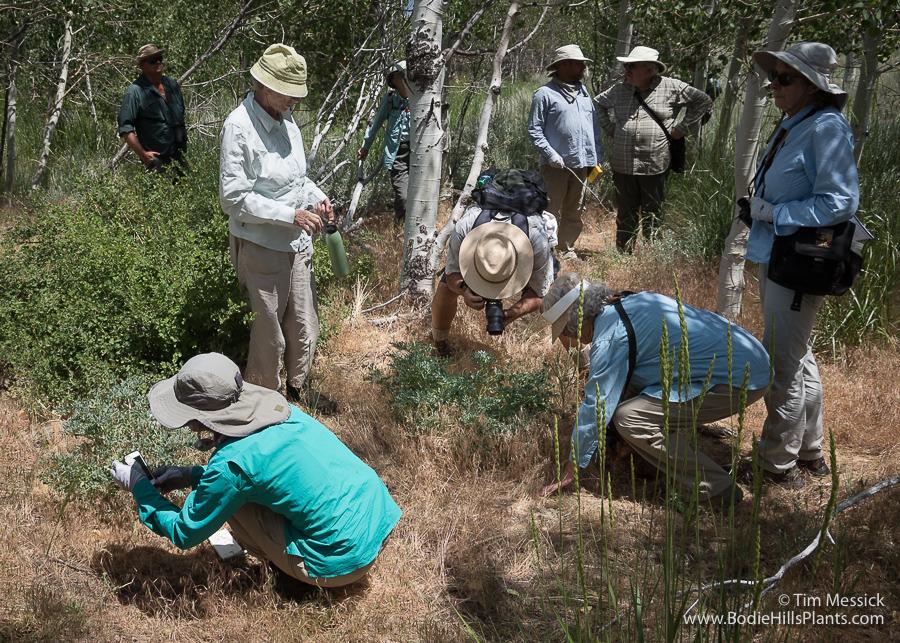 Inspecting Paeonia