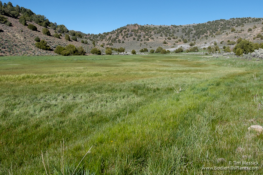 Upper end of Mormon Meadow