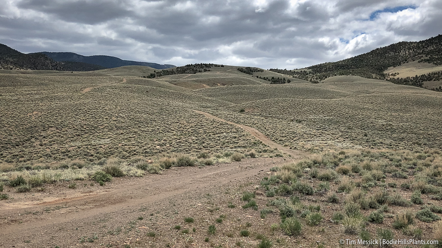 North side of the Bodie Hills, Road NF 128