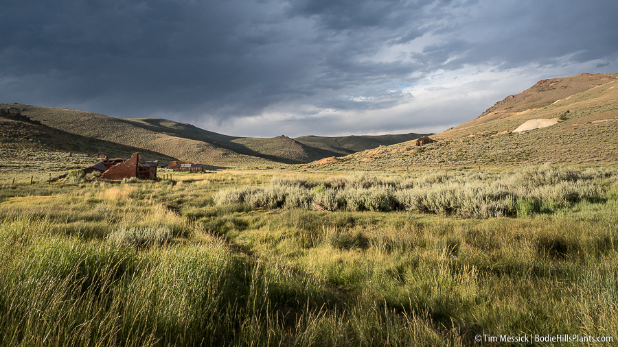 A rainy day at Bodie